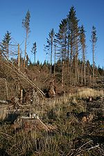 Teindland Forest The fallen trees at the left have made the road shown on the map totally impassable, but fortunately it was not too rough going round by the unplanted area across the burn.