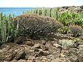 Teneriffa - Süd - La Galletas - Küstenwanderung nach Westen zum Leuchtturm von Punta Rasca - panoramio (3).jpg