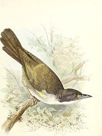 The Birds of Haiti and San Domingo (1885) (20384595265).jpg