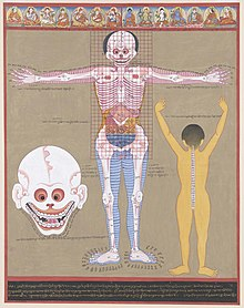 Anatomy - Wikipedia