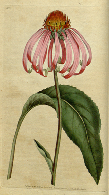 The Botanical Magazine, Plate 2 (Volume 1, 1787).png