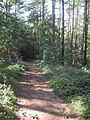 The Cotswold Way through Standish Wood - geograph.org.uk - 986290.jpg
