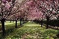 The Flower Association of Japan 3.jpg