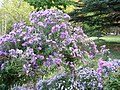 The TNU Botanical Garden in Simferopol, Crimea, Ukraine 25.JPG