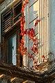 The building's Autumn life (2117144267).jpg