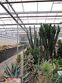 The cactus collection at Manor Nursery (4802678575).jpg
