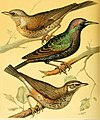 The illustrated book of canaries and cage-birds, British and foreign (1878) (14565142019).jpg
