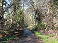 The lane to The Hermitage - geograph.org.uk - 1269183.jpg