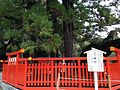 "The sacred tree ""Ayasugi"" (Japanese cedar) 2.JPG"