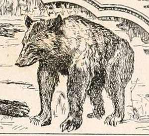 Baloo - Baloo in the 1895 edition of The Second Jungle Book