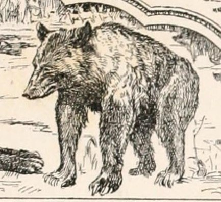 The second jungle book (1895) (Baloo)