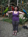 Three macaws -Macaw Mountain Bird Park, Honduras-8d.jpg