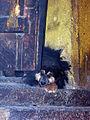 Tibet-5628 (2213211794).jpg