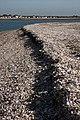 Tideline at Mersea Stone - geograph.org.uk - 1005389.jpg