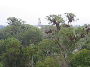 Tikal Temple III - The roof comb of Temple III standing above the forest canopy