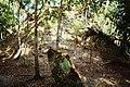 Tikal Complex R (9791244816).jpg