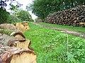 Timber Stacks by Blackbrook Farm - geograph.org.uk - 255069.jpg