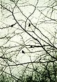 Tits in the web of branches - panoramio.jpg