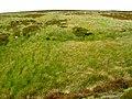 Towards Stony Ridge - geograph.org.uk - 895112.jpg