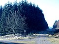 Track junction, Howcleuch Forest - geograph.org.uk - 686343.jpg