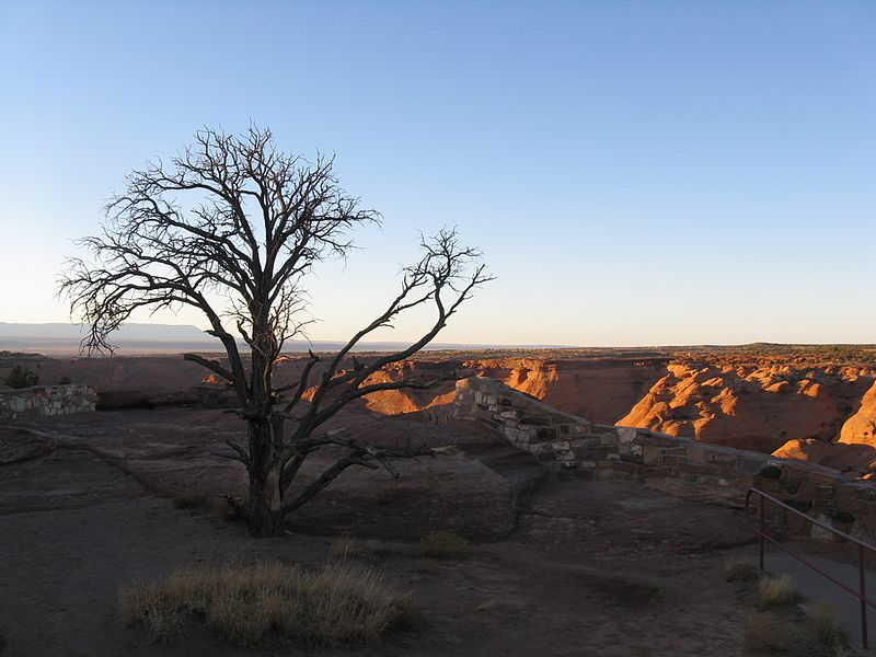 File:Tree, Canyon de Chelly, Apache County AZ.jpg