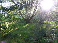 Tree-with-moss.JPG