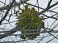 Tree 1240374.jpg