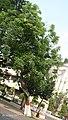Tree I IMG 4097.jpg