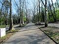 Tree avenue of London Plane in Hajd park, Belgrade 2.jpg