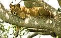 Tree lion.jpg