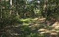 Tussen Bawinkel en Helte, bosgebied IMG 7156 2020-08-07 10.32.jpg