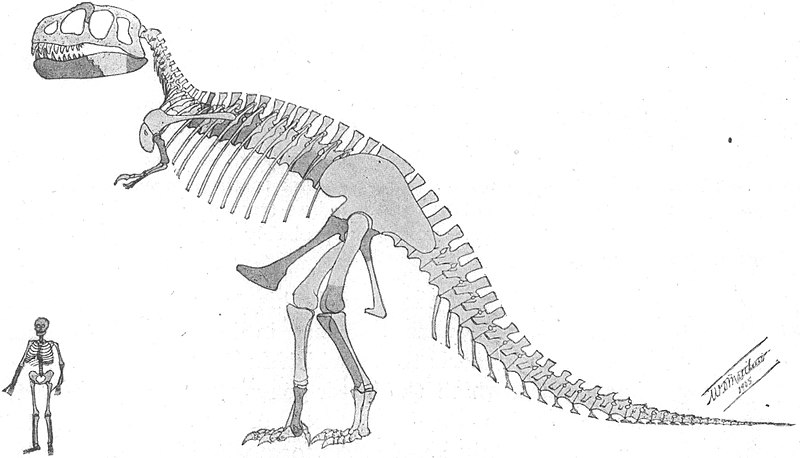 [Obrazek: 800px-Tyrannosaurus_skeleton.jpg]