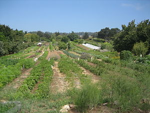 Center for Agroecology & Sustainable Food Systems - UCSC's organic farm