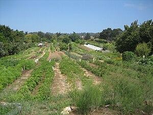 organic farm, ucsc