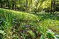 Umwaldete Orchideenwiese im Naturschutzgebiet 'Alter Gleisberg' bei Jena.jpg