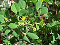Unknown plant-47.jpg