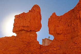 Utah, Bryce Canyon National Park, hoodoo and tree.jpg