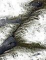 Vastenjaure Sallohaure (2002-05-28).jpg