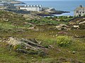 View across the heath towards the harbour entrance at Amlwch - geograph.org.uk - 1411496.jpg