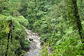 View from Kaituna Track across dense native bush and tree ferns.jpg