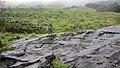 View of Eravikulam national park.jpg