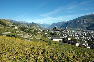 Swiss wine - Vineyards in Sion