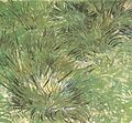 Vincent van Gogh - Clumps of Grass.jpg