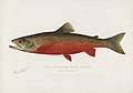 Vintage illustrations by Denton from Game Birds and Fishes of North America digitally enhanced by rawpixel 33.jpg