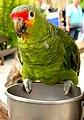 Vogelpark01.jpg