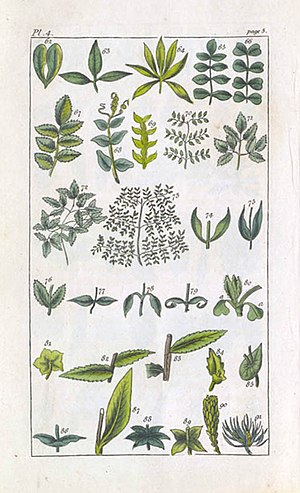 Priscilla Wakefield - Plate 4 from Priscilla Wakefield, An Introduction to Botany, 1796.