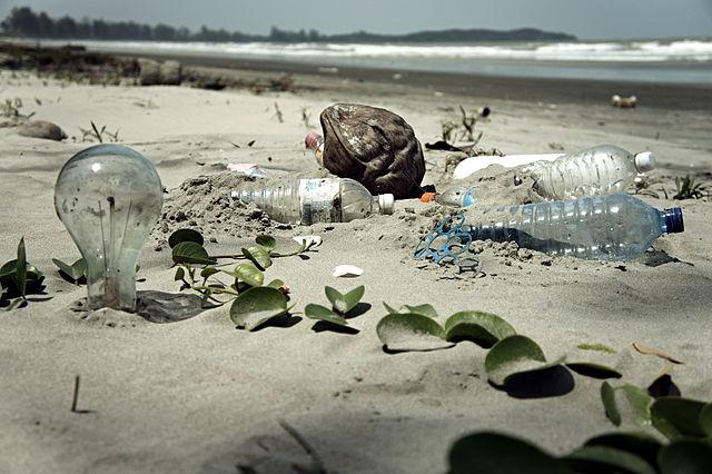 Только за один день волонтёры подняли с морского дна у побережья Дании 250 кг мусора