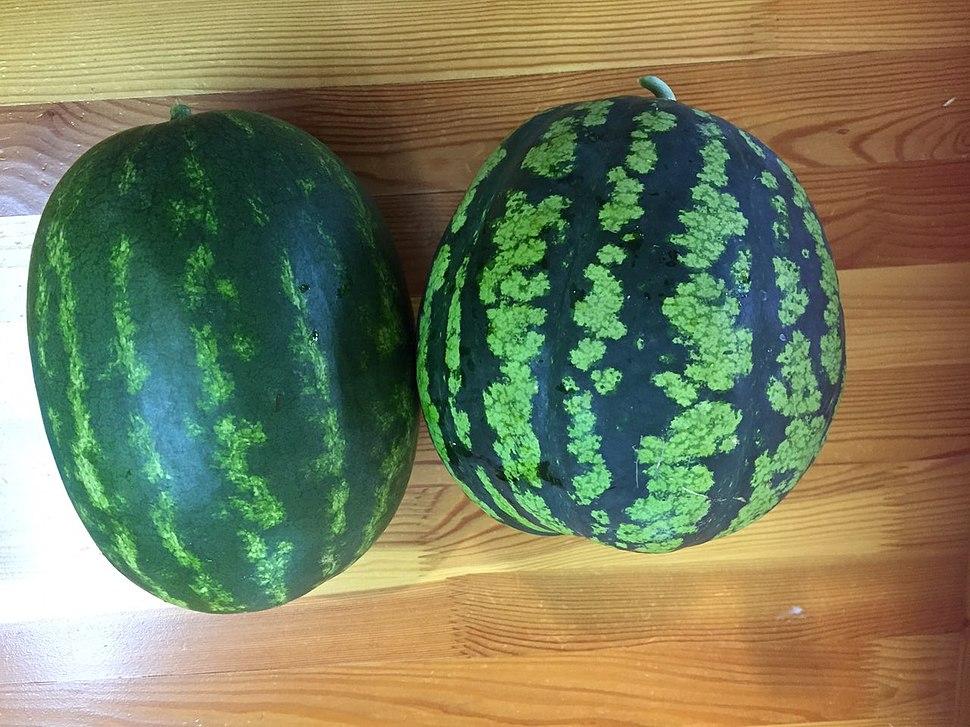 Watermelon grown in Buryatia, Siberia