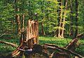 Weberstedter Holz.jpg