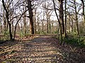 West Wood path, Hadleigh - geograph.org.uk - 113127.jpg